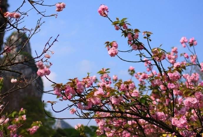 春天已到,气温回升!聊城赏花攻略给你奉上啦