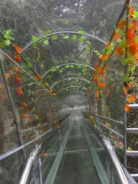 玻璃天桥与玻璃滑道完美结合   打造最美茶山风景区   从山上飞快的