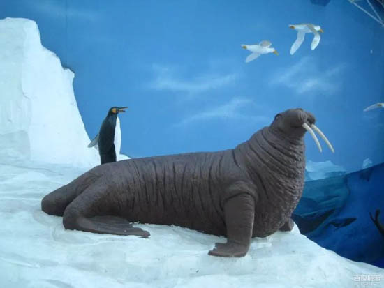 青岛极地海洋世界里还有独特的互动游戏,   和白鲸共舞,与海豚一起