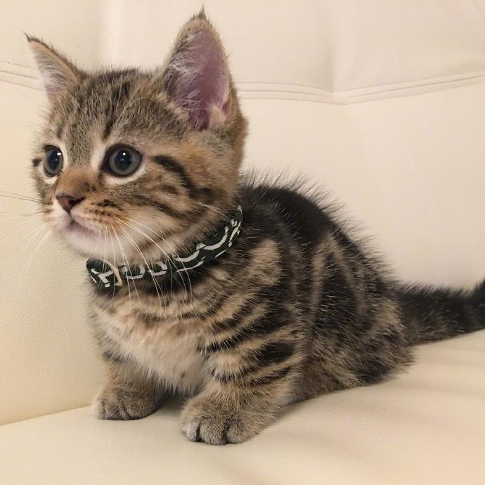 听说你还缺一只小猫咪,你看我可以吗?
