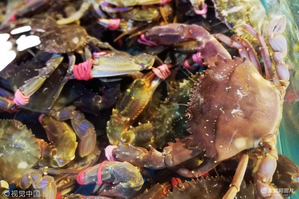 青岛:高温季节里海鲜供应充足 令人眼花缭乱