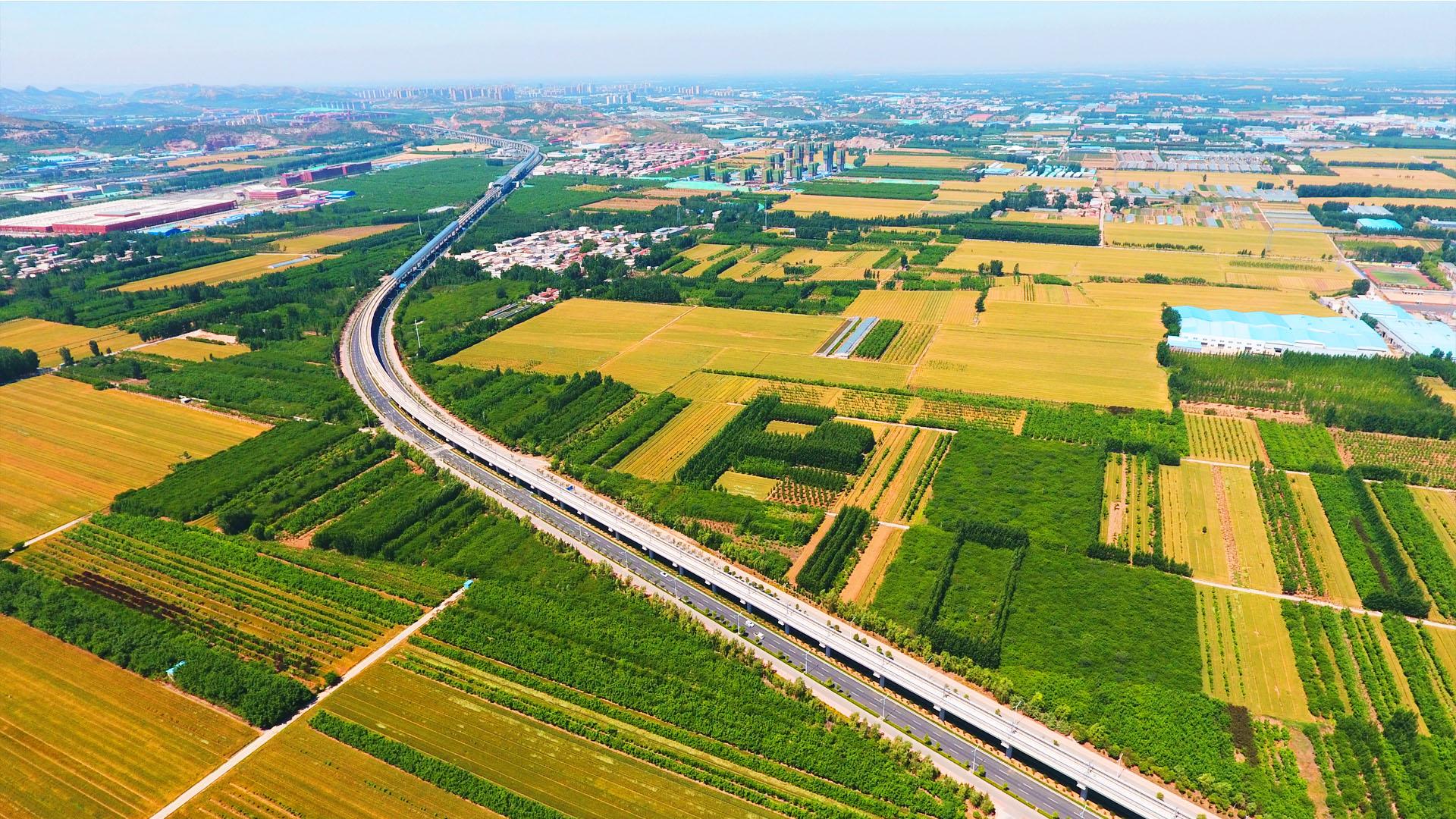 """济南500米高空俯瞰层层麦浪,看""""麦收""""前最美风景"""
