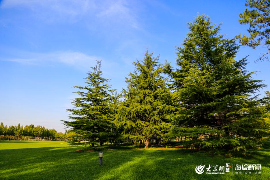 蓝天草坪绿树交映成一幅美丽的风景图