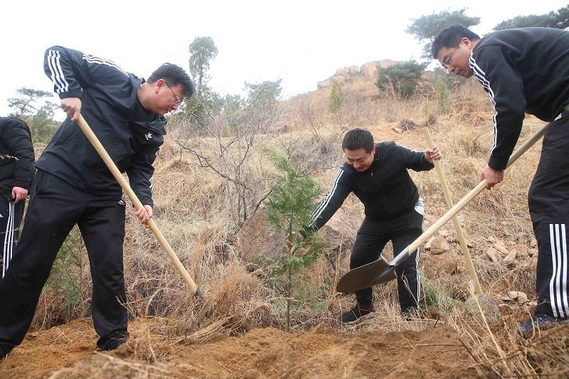 植树造林 播种希望 新泰农商银行开展义务植树活动-IF财经网