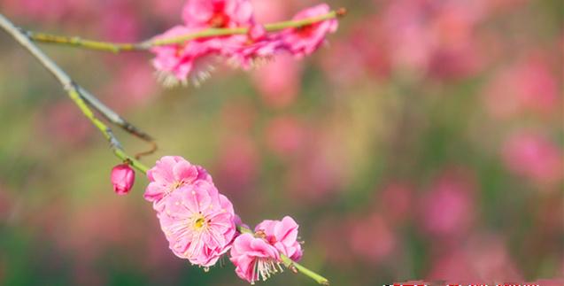 春已到 聆听滨州花开的声音