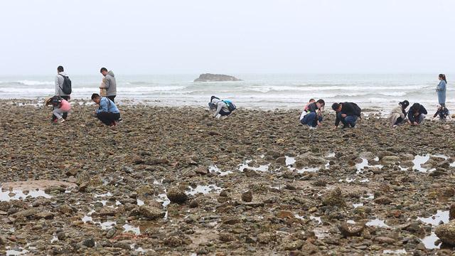 青岛:市民扎堆沙滩 石缝中淘贝壳