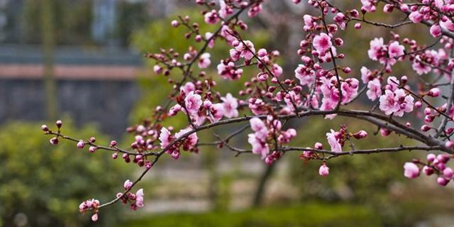 跟着日照网友的镜头,感受明媚春天!
