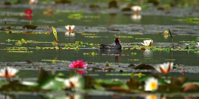 枣庄:湿地睡莲盛开 婀娜多姿别有风味