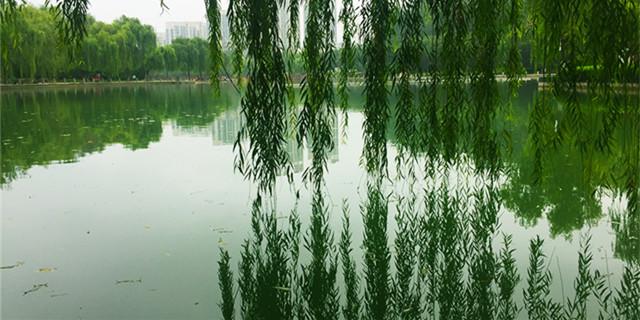 雨后邹平清新亮丽 如一幅美丽的风景画
