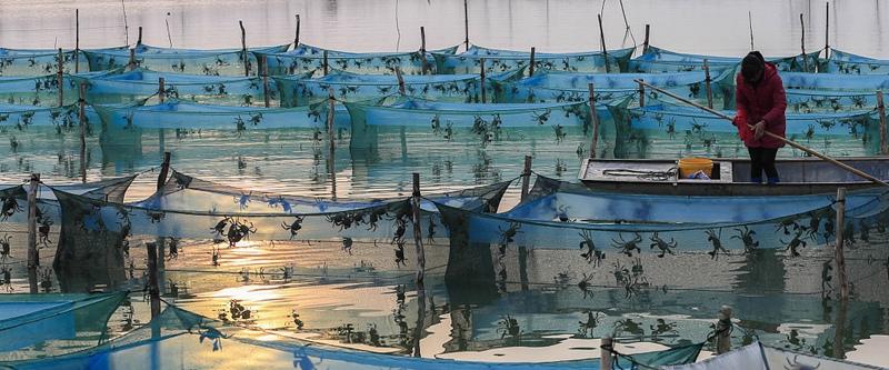 洪泽湖大闸蟹开始批量上市