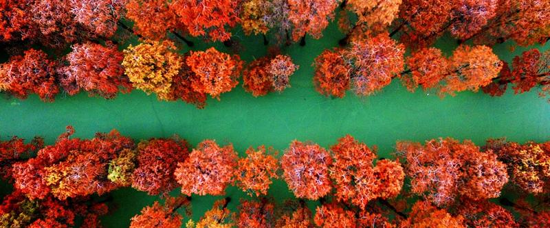 """武汉涨渡湖""""水上森林""""色彩斑斓"""