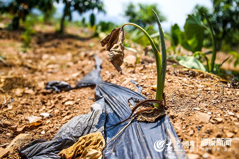 直击干旱:烟台一村庄断水20多天 村民靠水罐车运水度日
