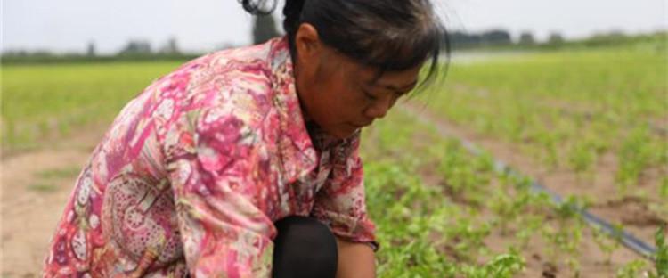 山东寿光:用水利建设洒下的汗水代替菜农的泪水