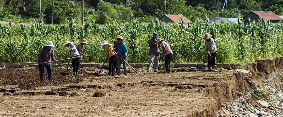山东潍坊:洪灾过后 农民忙生产