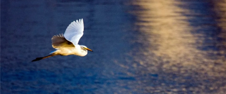 """真美,孝妇河湿地公园来了一群""""白色精灵""""!"""
