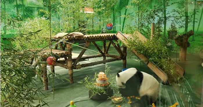 欢乐中秋国宝大熊猫在泰安生日趴现场火爆