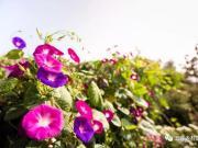 五莲县:秋天里住着一个春天