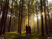 日照秋景:森林公园光影迷人