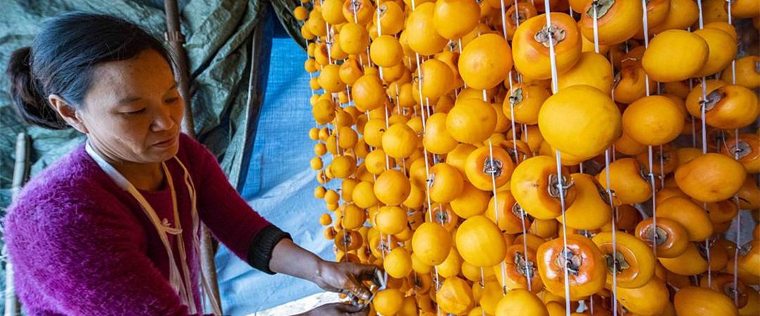 山东潍坊:红柿染金秋 农民加工忙