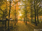 深秋意正浓 原来烟台的秋天这么美!