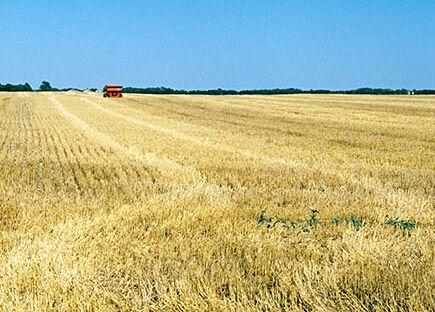 『新华网』企业全力生产,山东德州粮食稳产保供见闻:粮食储备充足