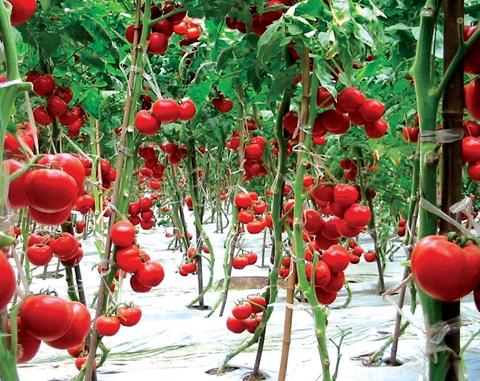 东营区六户镇:农产品品牌建设助力乡村振兴