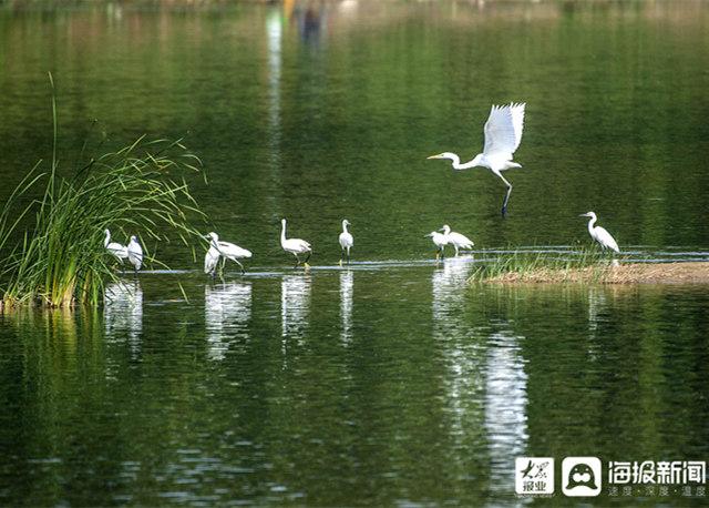 潍坊:白鹭弥河舞金秋