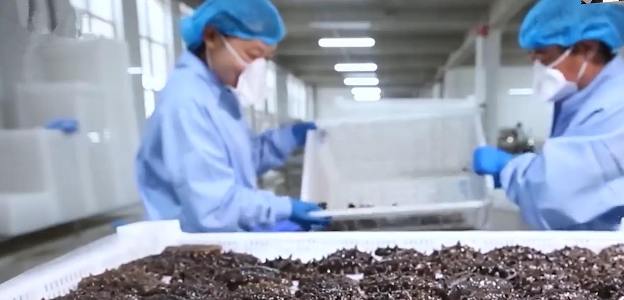 好当家集团:一只海参撬动百亿产业