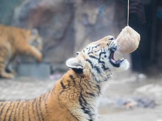 济南动物园的小可爱们吃元宵大餐啦