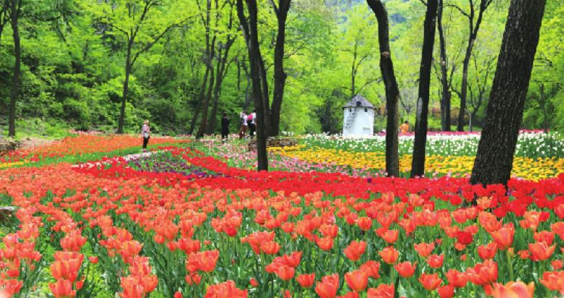 看济南人如何花式过春天