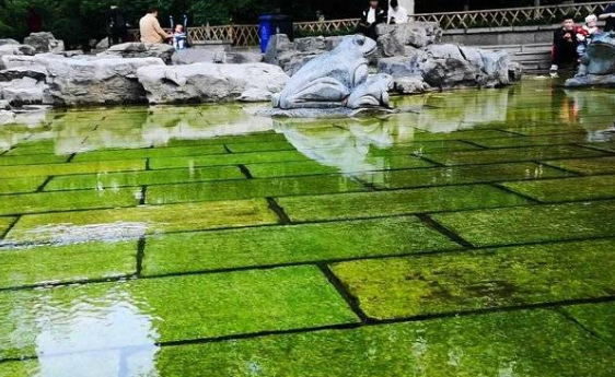 春夏旱季,济南汩汩清泉继续石上流