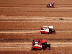 高于最低收购价!临沂市辖区小麦价格普遍在1.20元以上