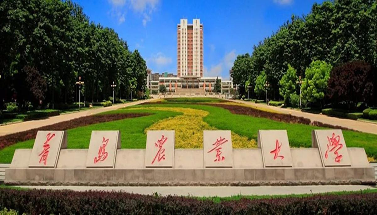 青岛农业大学学子团歌放声唱,表白我的国!