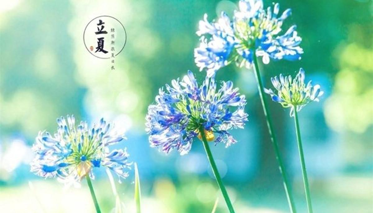 青岛农业大学二十四节气丨立夏——青春虹韵