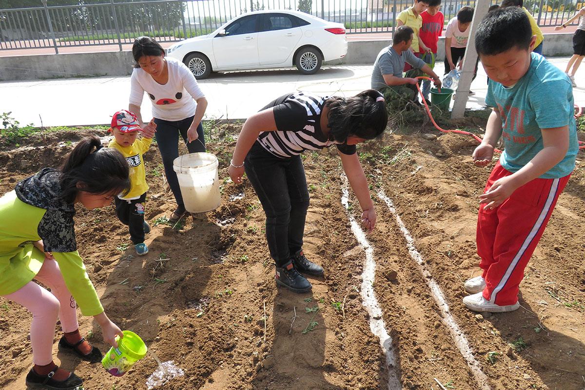 龙口市羊岚小学开展蔬菜种植劳动manbetx网页版手机登录综合实践活动