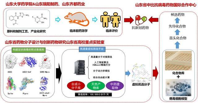山东大学刘新泳教授团队抗新冠肺炎药物研究取得系列进展