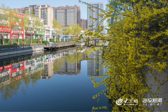 云赏花丨嫩绿的枝叶,团簇的黄花,春