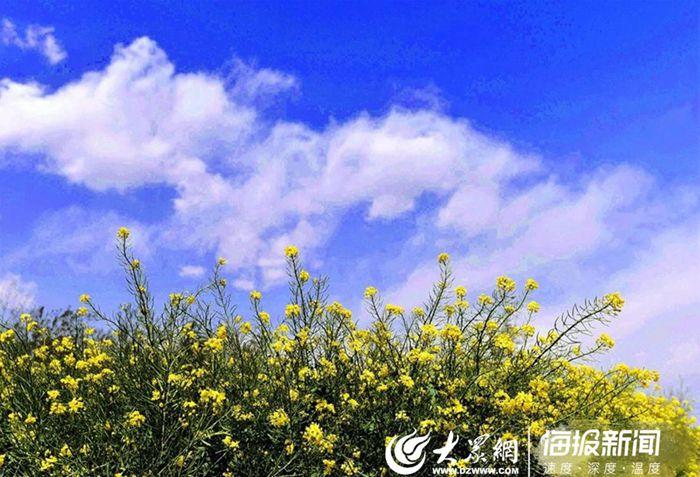 『大众网·海报新闻』打卡菏泽成武白浮图:春暖花开藏不住啦!