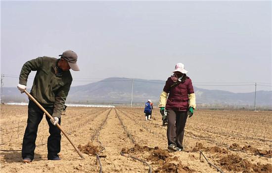 学习强国山东学习平台:威海南海新区:现代农业为千里沃野披锦绣