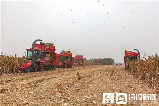 微山县韩庄镇建设生态循环农业养殖项目 培育农村新业态
