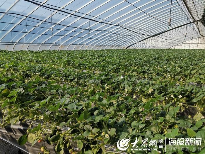 立体式草莓栽培温室
