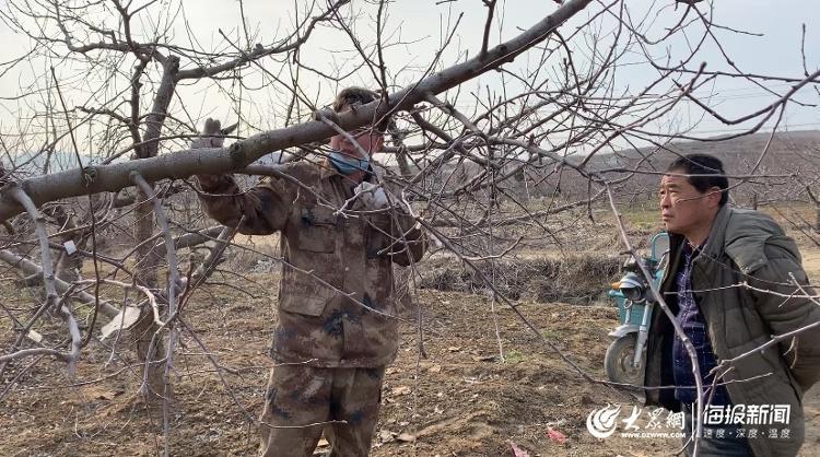 """3月5日上午,牟平区农业农村局的农艺师""""手把手""""向当地果农们分享果园管理及果树修剪的技巧"""