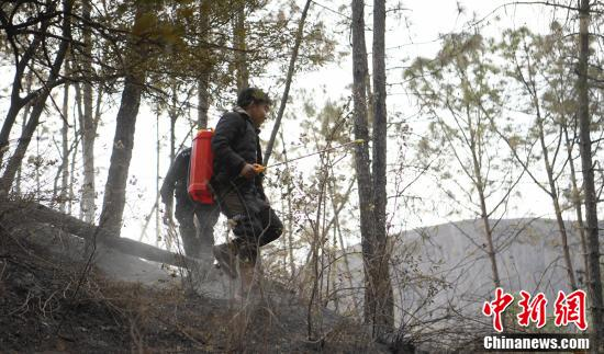四川西昌森林火災火場堅守的撲火隊員