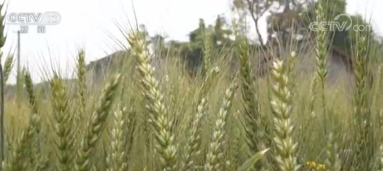 农资供给质量为重 农资向优向绿转变成为新亮点