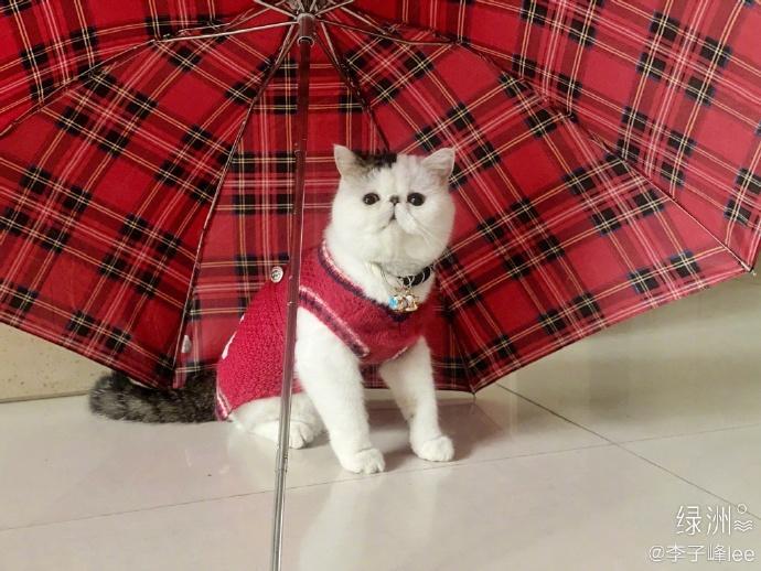 """大众网·海报新闻胖丫红衣红伞超洋气,李子峰成""""晒猫狂魔"""""""
