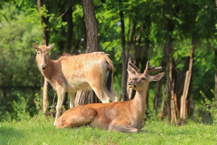 「大众报业·海报新闻」济南野生动物世界邀山东籍游客来享优惠啦