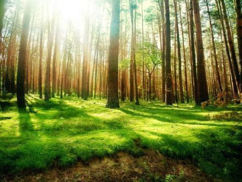山东创建国家森林城市17个