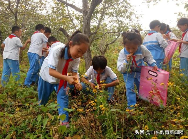 济南市南营小学秋季中草药采集活动开始啦