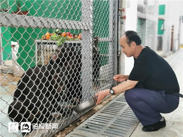 探馆烟台网红黑猩猩:模仿能力强 能听懂简单指令