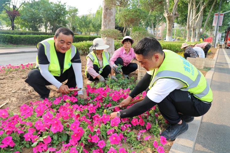 临沭县美化市容市貌 新增绿化面积10万多平方米